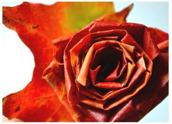 Розы из листьев клена. Мастер-класс
