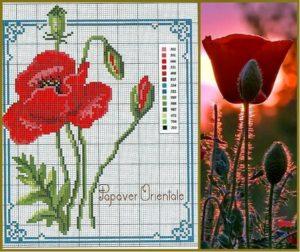 poppy-3
