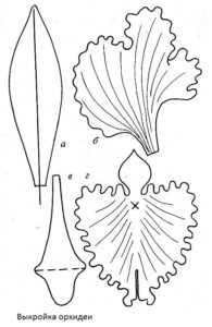 Vykroyka-orxidea
