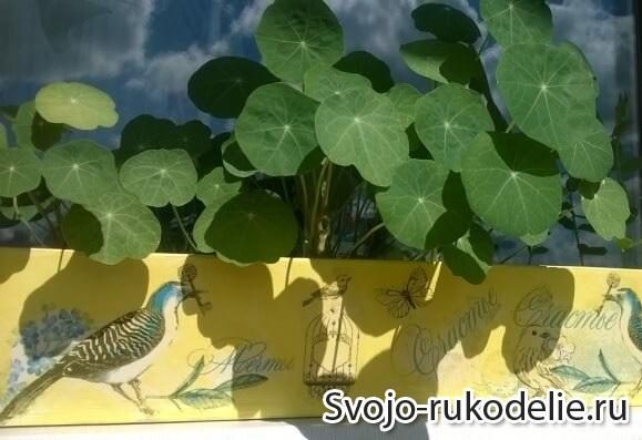 dekupage-yashik-dla-cvetov
